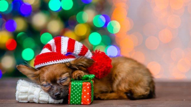 Des joyaux abordables : 55 idées de cadeaux de Noël bon marché - Abonnement à un coffret de jouets pour animaux domestiques